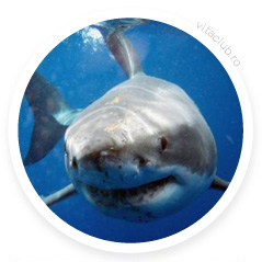 capsule cartilaj de rechin pret