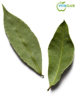 Frunze de dafin pentru tratarea varicelor si durerilor articulare