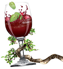 pahar cu sirop din fructe de noni organic