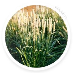 planta-psyllium.jpg