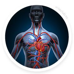 ginkgi biloba ajuta circulatia sanguina